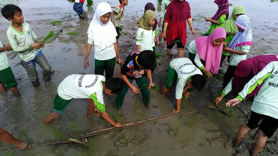 Siswa Siswi MI Muhammadiyah Krendetan Belajar Menanam Padi