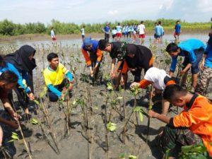 1001-mangrove-3