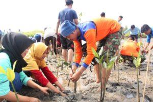 1001-mangrove